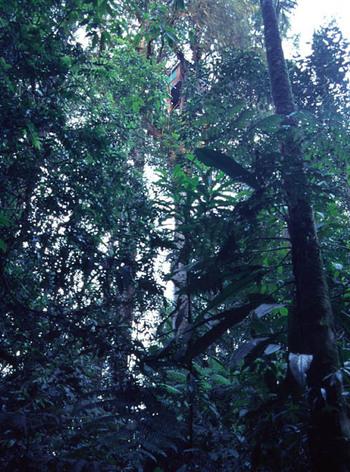Treehouse0104